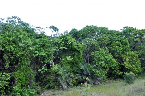 Por qué es importante la conservación de los bosques tropicales - Es importante conservar los bosques tropicales porque estabilizan el clima