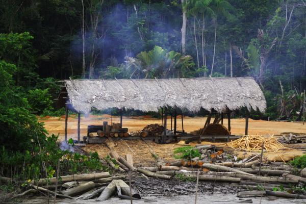 Por qué es importante la conservación de los bosques tropicales - Impactos negativos de la tala de los bosques tropicales