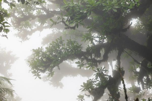 Por qué es importante la conservación de los bosques tropicales - Los bosques tropicales ayudan a mantener el ciclo del agua