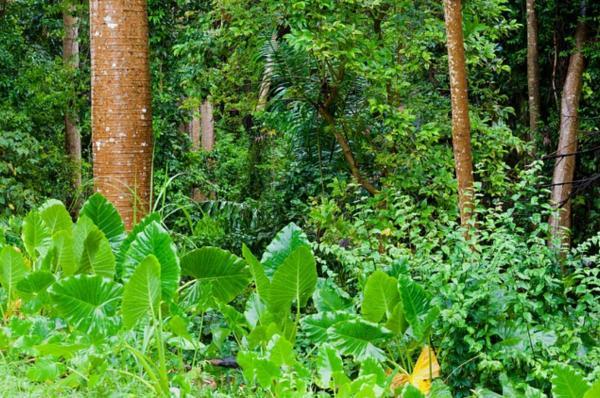 Por qué es importante la conservación de los bosques tropicales
