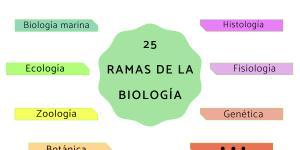 Ramas de la biología y qué estudian