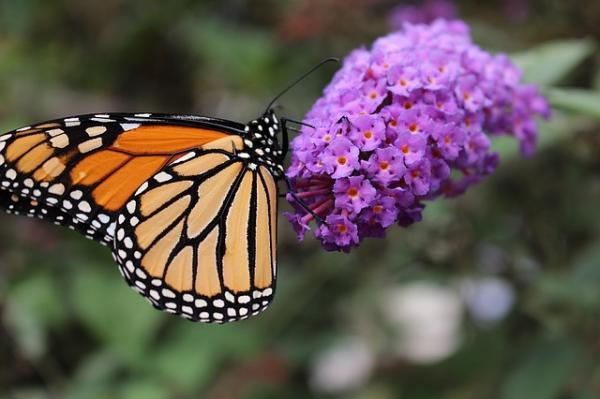 Cuáles son los insectos polinizadores y su importancia - Cuáles son los insectos polinizadores