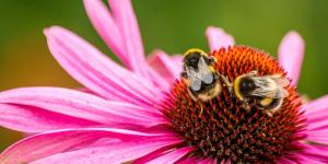 Insectos polinizadores: cuáles son y su importancia