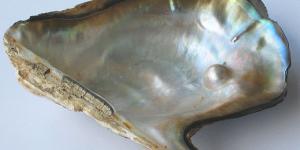 Cómo se forman las perlas
