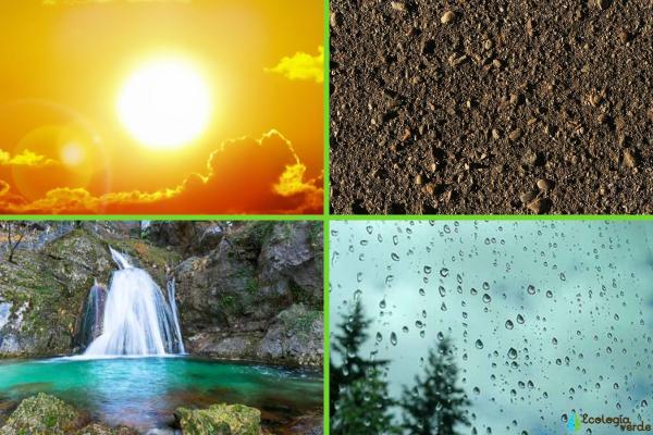 Factores abióticos: qué son, características y ejemplos - Ejemplos de factores abióticos