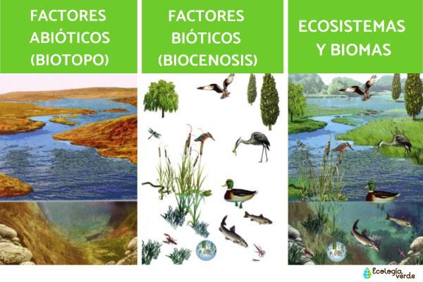 Factores abióticos: qué son, características y ejemplos - Qué son los factores abióticos