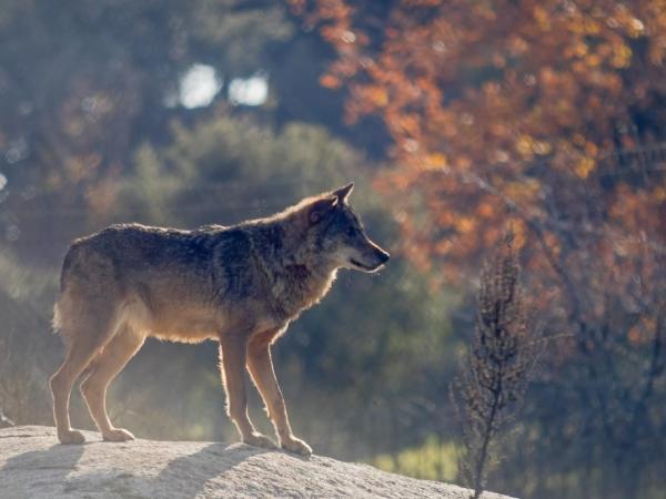 Qué es una especie nativa o autóctona - Qué es una especie nativa o autóctona - definición