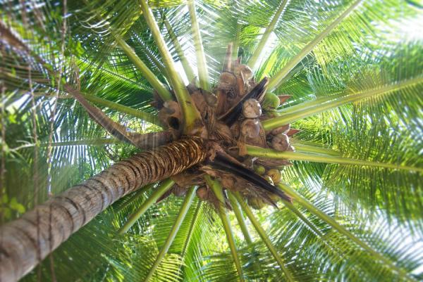 C mo plantar una palmera y sus cuidados gu a pr ctica - Tipos de plantas y sus cuidados ...