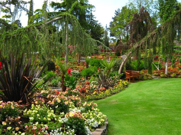 Cómo plantar una palmera y sus cuidados - Cuidado de las palmeras