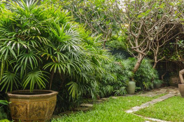 Cómo plantar una palmera y sus cuidados - Tipos de palmeras