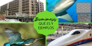 Biomímesis: qué es y ejemplos