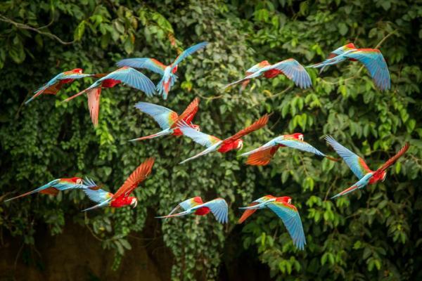 Conservación de la biodiversidad: qué es, prácticas e importancia - Qué es la conservación de la biodiversidad