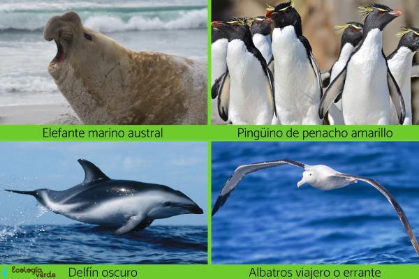Animales de la Antártida - Otros animales de la Antártida