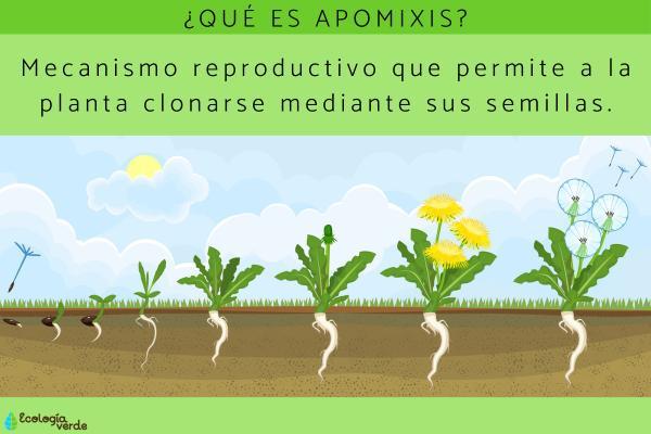 Apomixis: qué es, tipos y ejemplos