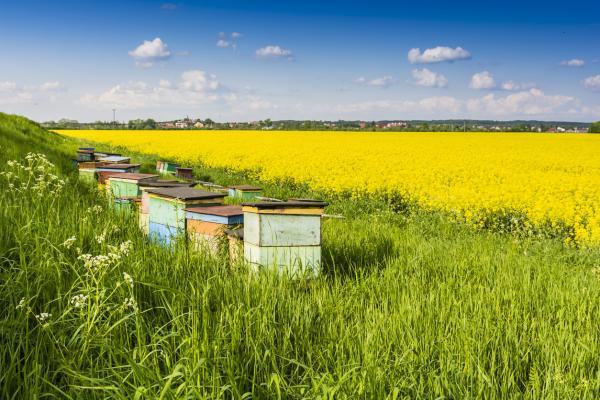 Qué es el biodiésel, ventajas y desventajas - Inconvenientes del biodiésel