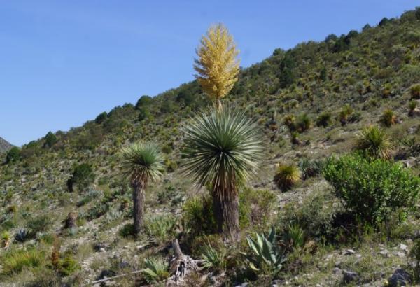 Plantas xerófitas: qué son, características y ejemplos - Qué son las plantas xerófitas y sus tipos