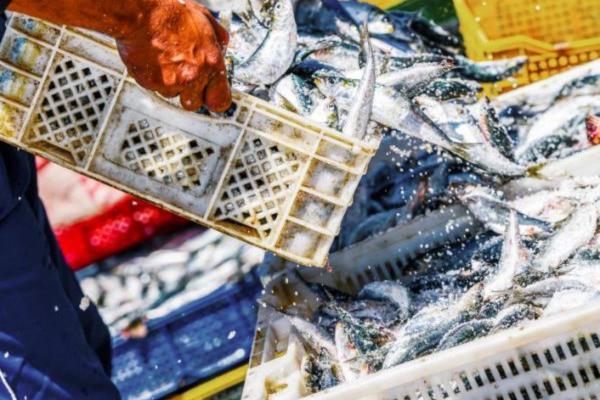 Principales problemas ambientales en Argentina - Sobrepesca y explotación de océanos en Argentina