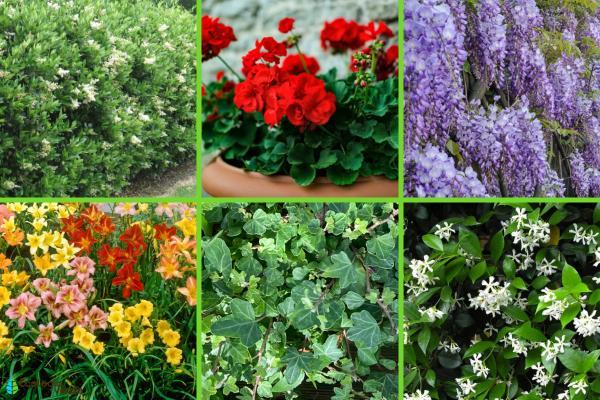 Plantas de exterior resistentes al frío y calor - Otras plantas de exterior resistentes al frío y calor