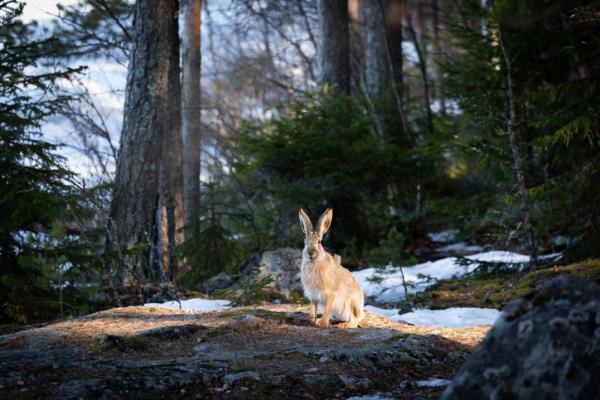 Bosque perennifolio: qué es, características, flora y fauna -  Bosque perennifolio: fauna
