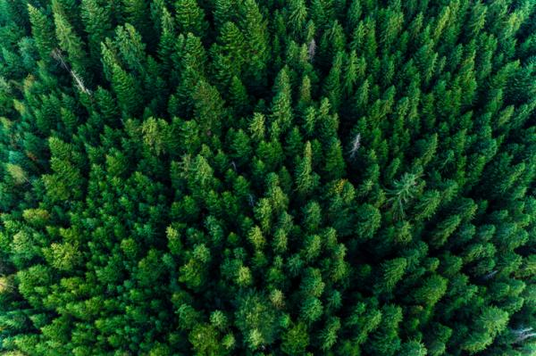 Bosque perennifolio: qué es, características, flora y fauna