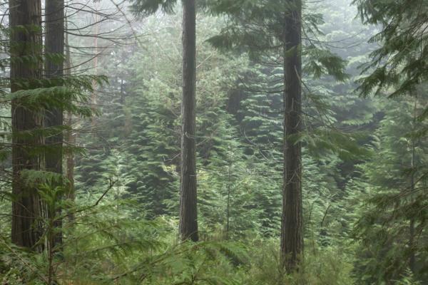 Bosque perennifolio: qué es, características, flora y fauna - Qué es un bosque perennifolio y sus características