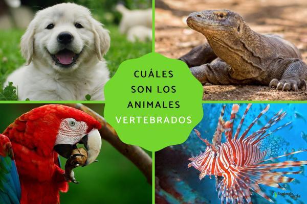 Animales vertebrados:clasificación,características y ejemplos