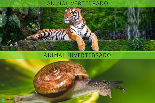 Animales vertebrados:clasificación,características y ejemplos - Diferencias entre los animales vertebrados e invertebrados