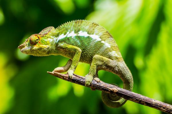 Animales vertebrados:clasificación,características y ejemplos - Reptiles