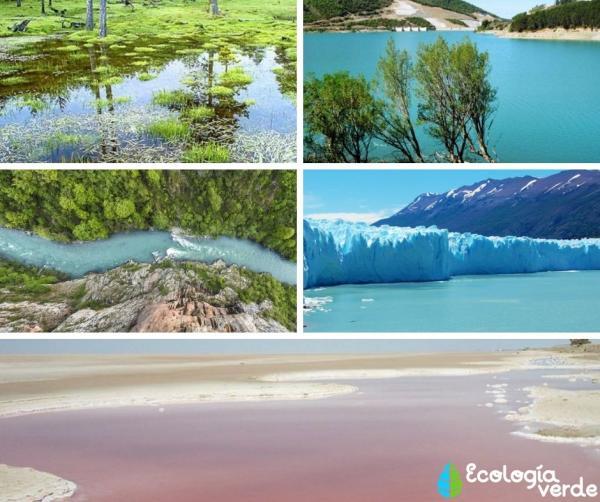 Tipos de biomas acuáticos - Biomas acuáticos de aguas continentales