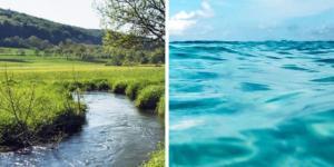 Tipos de biomas acuáticos