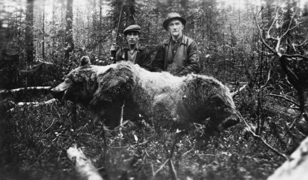 Por qué se extinguió el oso gris mexicano - Causas de la extinción del oso gris mexicano