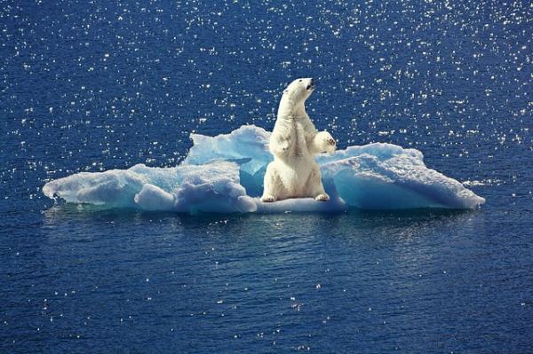 Hielos perpetuos: clima, flora, fauna e imágenes - Fauna de los hielos perpetuos