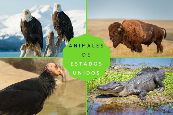 Animales de Estados Unidos