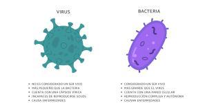 Diferencia entre virus y bacteria