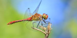 Por dónde y cómo respiran los insectos