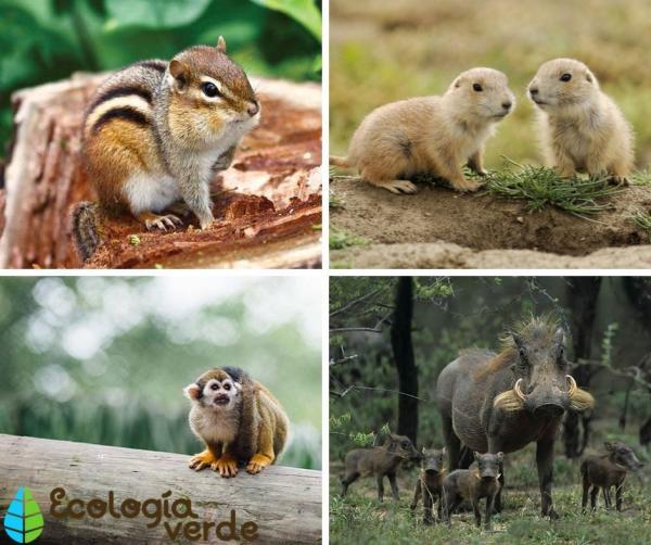 Animales nocturnos y diurnos: lista y fotos - Animales diurnos: lista de ejemplos