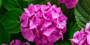 Inflorescencia: qué es, tipos y partes
