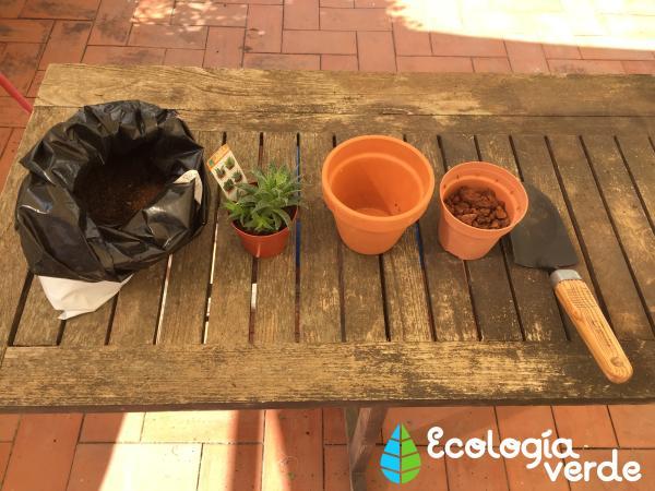 Trasplantar una planta: cuándo y cómo hacerlo - Cuándo trasplantar una planta