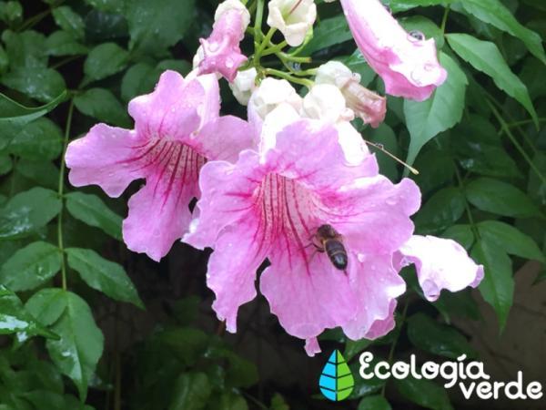 Diferencia entre abeja, avispa y abejorro - Diferencia en la dieta de la abeja, la avispa y el abejorro