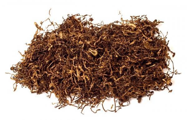 Insecticidas caseros para limoneros - Insecticida de tabaco para limoneros