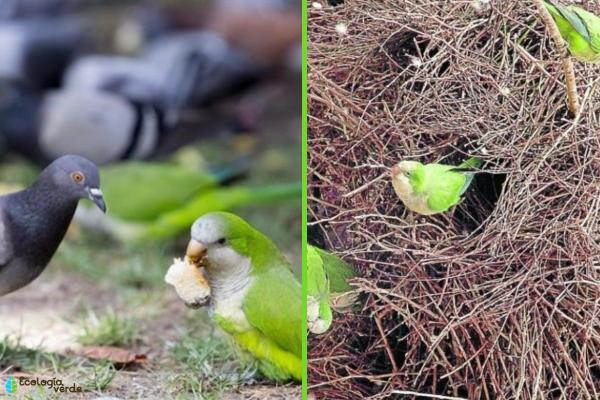 Especies invasoras: qué son, ejemplos y consecuencias - Consecuencias de las especies invasoras