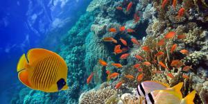Hábitat acuático: qué es, características, tipos y ejemplos