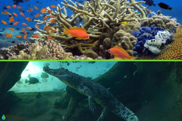 Hábitat acuático: qué es, características, tipos y ejemplos - Tipos de hábitat acuático