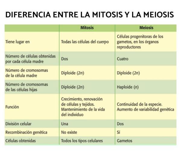 Diferencia entre mitosis y meiosis - Diferencia entre mitosis y meiosis - resumen