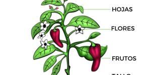 Partes de una planta y sus funciones