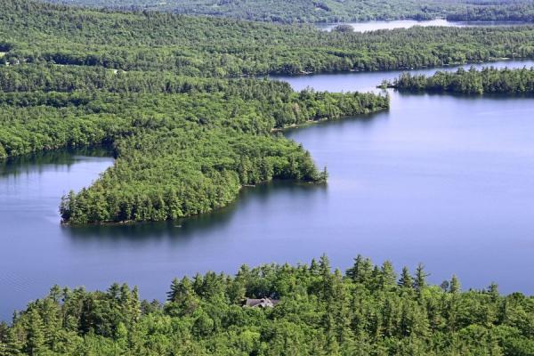 Factores bióticos y abióticos del bosque - Factores abióticos del bosque