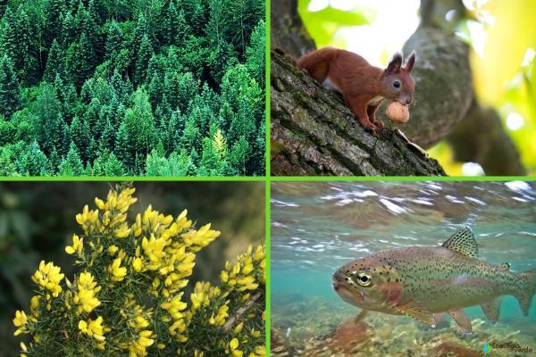 Factores bióticos y abióticos del bosque - Factores bióticos del bosque