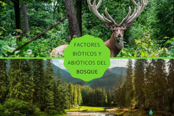 Factores bióticos y abióticos del bosque