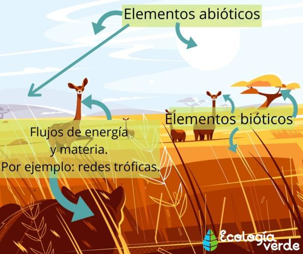 Cómo funciona un ecosistema - Componentes de un ecosistema