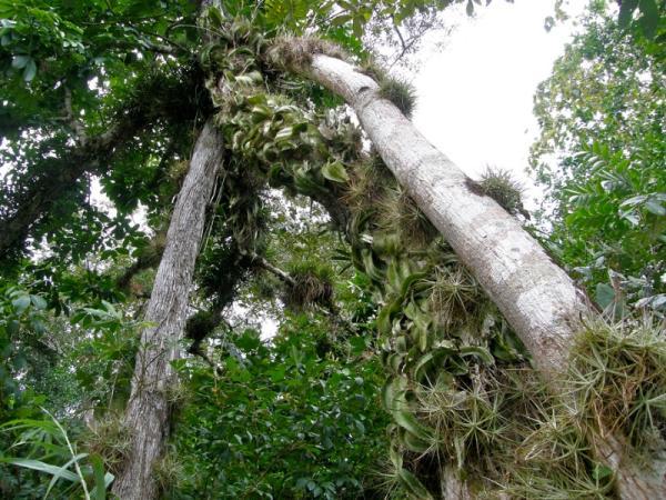 Selva Lacandona: flora y fauna - Flora de la selva Lacandona